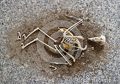 A birds skeleton