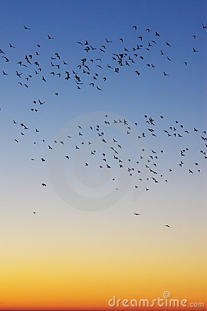 Birds in sunrise sky