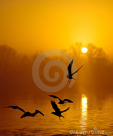 Birds in sunset