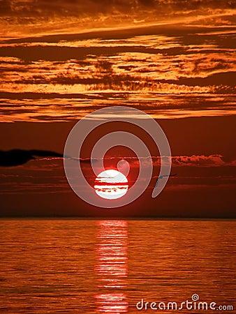 Birds, sunset, sea 1