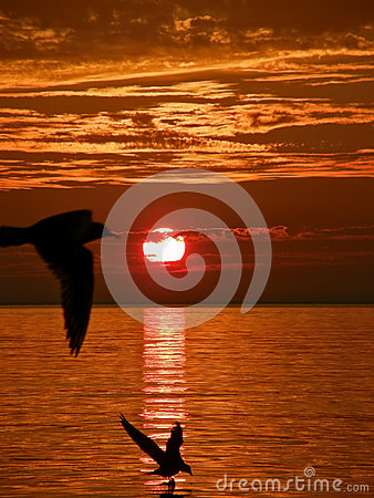 Birds, sunset, sea