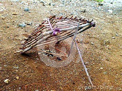 how to make a bird trap with sticks