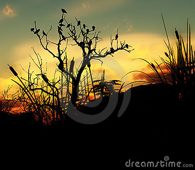 Birds On A Tree With Sky Background 4