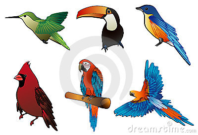 Birds vector composition
