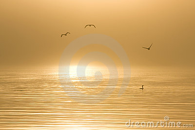 Birds in water at dawn