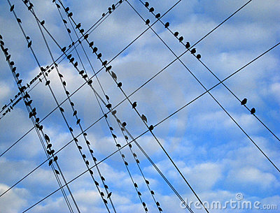 Birds On A Wire Stock Photo - Image: 12596810