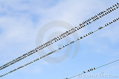 Birds on a wire - pattern