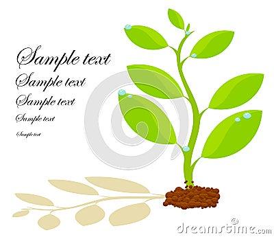 Birth of plant