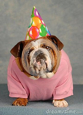 Birthday Bulldog Royalty Free Stock Photos Image 8185228