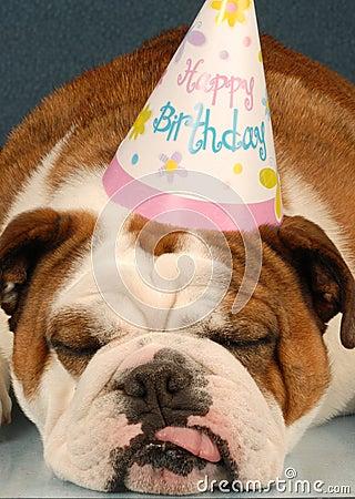 Birthday Bulldog Stock Photos Image 8908303
