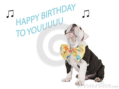birthday card with english bulldog singing stock photo  image, Birthday card