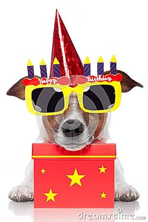 Free Birthday Dog Stock Photography - 25092882