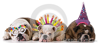 Birthday dogs Stock Photo