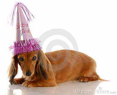 Birthday girl dog