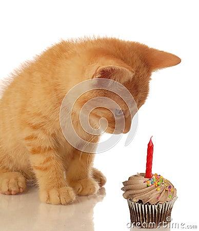 Birthday kitten with cupcake