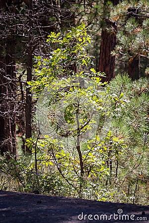 Free Bismarck Lake Trail In Northern Arizona. Royalty Free Stock Photo - 77997625
