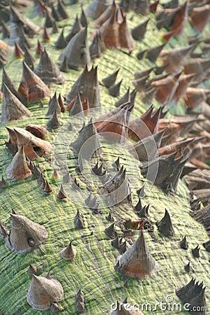 Bizarre looking tree resembling alien terrain