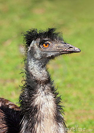 Bizarre ostrich bird head