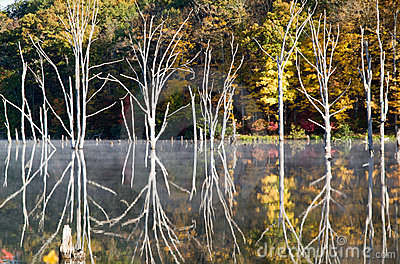 Bizarre reflections at Monksville Reservoir