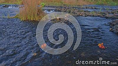 Blätter schwimmen entlang des Flusses und feuchte Steine um den Fluss herum Der Herbst ist da stock video footage