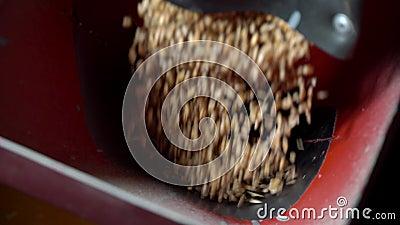 Blé déchargé d'un camion dans une usine de farine Le grain est en train de se répandre Déchargement du grain de blé Stade de prod clips vidéos