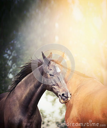 Free Black And Brown Horses In Sunlight On Summer Or Autumn Nature Background Royalty Free Stock Images - 56839819