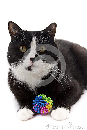 Free Black And White Cat With A Toy Stock Images - 50002374