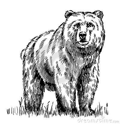 Free Black And White Engrave Isolated Vector Bear Stock Image - 63417031