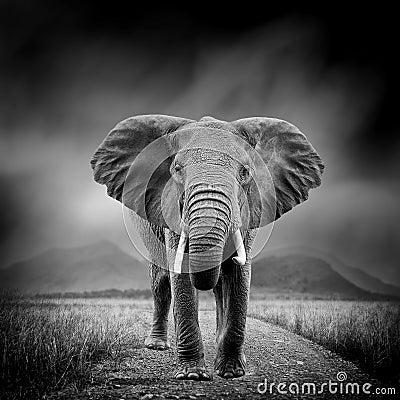 Free Black And White Image Of A Elephant Stock Photos - 91130953