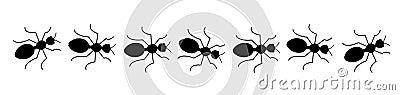 Black ants line
