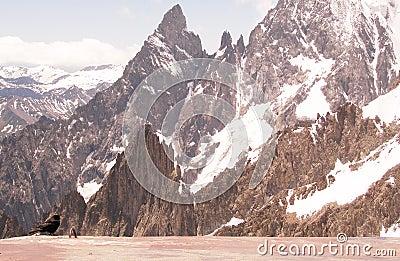Black bird and rocky mountains