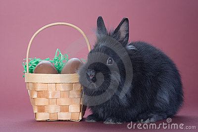 Black bunny with chocolate eggs