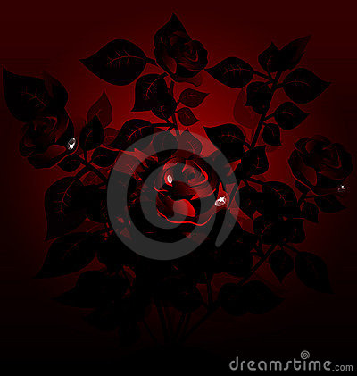 black bush of roses