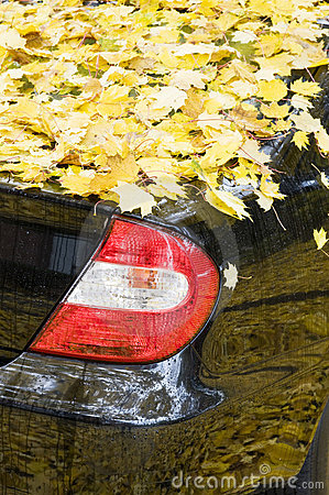Black car covered with yellow autumn leaves