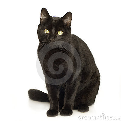 Free Black Cat Stock Photos - 3885723