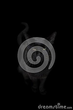 Free Black Cat Stock Image - 6659481