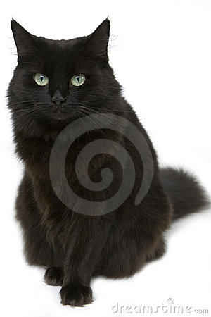 Free Black Cat Stock Photography - 7156622