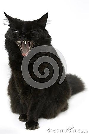 Free Black Cat Stock Photography - 7156642