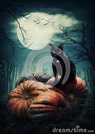 Free Black Cat Stock Image - 76199191