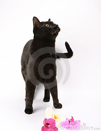 Free Black Cat And Orchids Royalty Free Stock Image - 14843556