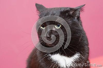 Black cat in anger