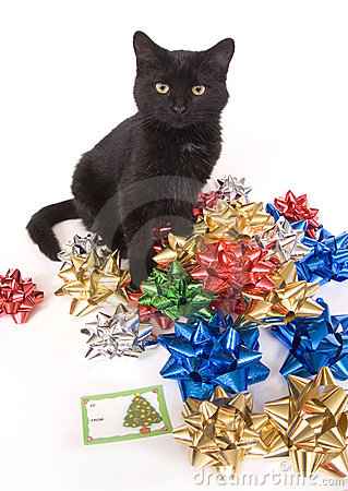 Black cat and christmas bows