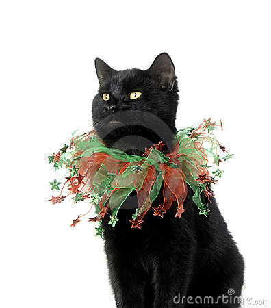 Black cat with Christmas collar