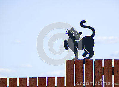 The black cat on a fence