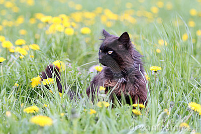 Black cat in flowers