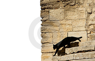 Black cat in front of wall
