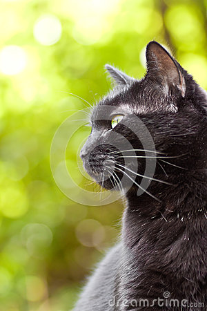 Black cat on a green background