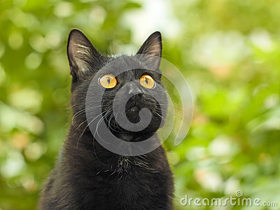 Black cat on green foliage background