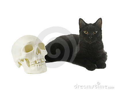 Black Cat and a Human skull