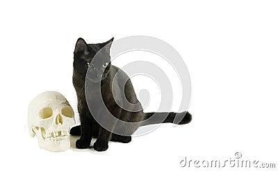 Black Cat and a Human skull